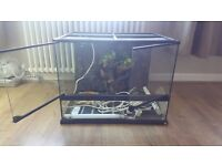 Glass Tank - Vivarium Perfect for Bearded Dragons With Some Accessories