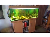 Juwel Fish Tank and Cabinet