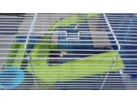 Hamster /gerbil/mouse cages