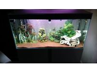 Fish tank for sale, (Everything is included) it's 4ft , with High Gloss White stand/Cabinet