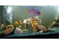 4ft 350L fish tank full setting