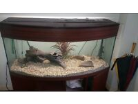 free delivery fishtank curved front with stand