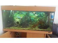 3 half foot tropical fish tank