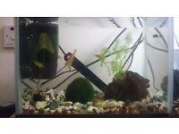 Small fish tank 19L