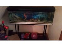 4 ft fish tank and stand