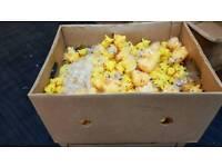 2 boxs of pikacu