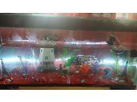 fish tank/vivarium