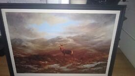 Large picture of Stag
