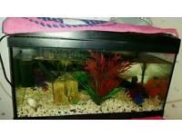 Fish Tank with 3 Paradise Fish