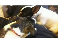 2 very loving dogs