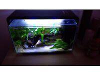 Nano Fish Tank (like new)