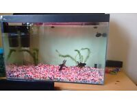 55 litre clear seal fish tank, all accessories and 2 beautiful black fantail fish