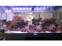 Chrap corals and liverock