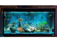Four ft fish tank