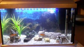 fish tang