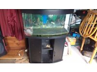 3ft Bowed tank and stand