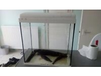 Fish tank and accessories, 20ltr tank with air pump, air stone and castle.