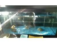 Fish and fish tank satep for sale