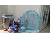 2 baby Budgies with cage, food and nesting house.