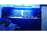 8 foot fish tank