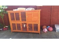 Rabbit, Hutch & Everything else for sale