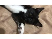 11 Months Old Cat / Kitten for Sale - New Home