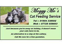Moggy mo's cat 🐱 feeding service York