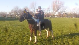 Horse mair square gower pacer verry fast