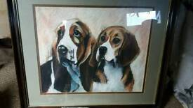 Basset and beagle picture