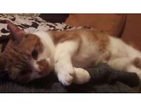 Missing House Cat - Please Help - Reward!£££
