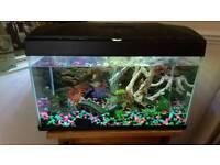 Tropical fish tank plus fish