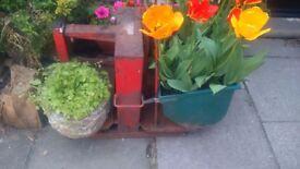 vintage potato scales ex veg farm shop .for use decorative or as a planter