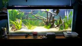 New made to measure aquarium