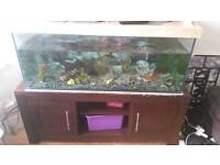 4ft fish tank with NEW external filter