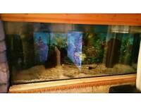2 x 4 foot Fish tanks and more
