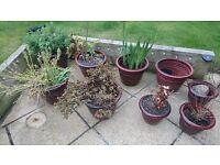 """6x 16"""" + 3x 11"""" diameter plastic garden flower pots"""