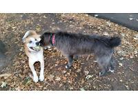 Dog Walker / Dog Sitter - Ealing & Gunnersbury Park