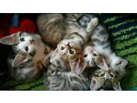 Six kittens for sale