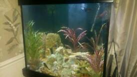 Aqua one cube fish tank
