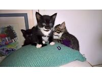 Adorable kittens looking for forever homes in Portland