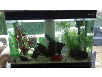 A beautiful Boyu 250l aquarium with cabinet for sale
