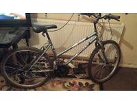 adult unisex bike