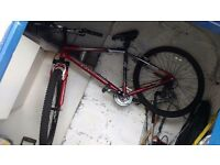 Mountain bike for sale immaculate condition, barracuda kronos , kenda tyres, 110 pounds