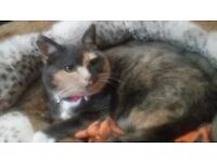 Cat for rehomeing