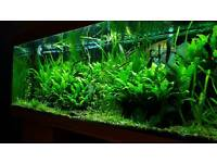Juwel RIO 400 complete tank with equipment