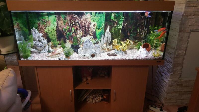 400 liter aquarium in baden w rttemberg mannheim aquarium und aquaristikzubeh r g nstig. Black Bedroom Furniture Sets. Home Design Ideas