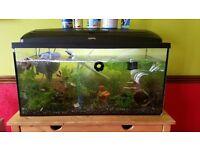 Full Fish Tank Setup