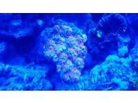 Marine coral ocean fish Live rock