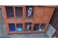 Rabbits with Rabbit Hutch and Rabbit Run