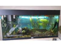 Fish Tank 160L + Fish + Accessories (filter, lamp, bubbles, heater)